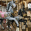 Carousel by Phyllis Taylor