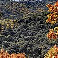 Cartajima by Goyo Ambrosio