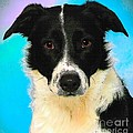 Cartoon Collection No 3 Life With A Border Collie In Usa by Julie Doerges