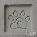 Carved Sand Paw Print by Megan Cohen