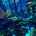 Casablanca Aquarium Close-up by Hannah Rose