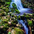 Cascade Creek by Chad Dutson