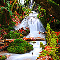 Cascade Creek by Randy Giesbrecht