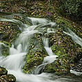 Cascade by David Waldrop