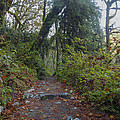 Cascade Forest Path by Darleen Stry