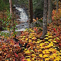 Cascade Creek  Autumn by James Peterson