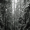 Cascade Snow by Loren McNamara
