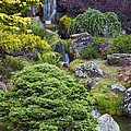 Cascade Waterfall - Japanese Tea Garden by Adam Romanowicz