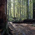 Cascades Forest Path by Darleen Stry