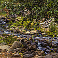 Cascading Creek by Maria Coulson