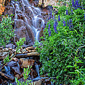 Cascading Falls by Dianne Phelps