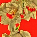 Cascading Gladiolas by Deborah  Crew-Johnson