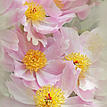 Cascading Pink Peony Flowers by Jennie Marie Schell