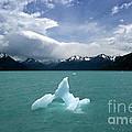 Castaway In Patagonia by James Brunker