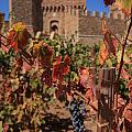 Harvest Castelle Di Amorosa by Scott Campbell