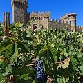 Ripe On The Vine Castelle Di Amorosa by Scott Campbell