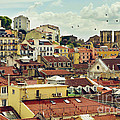 Castle Hill Neighborhood by Carlos Caetano