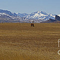 Castle Rock Horses   #8515 by J L Woody Wooden