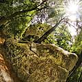 Castle Rock State Park Bolder by Blake Richards