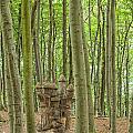 Castle Tree Stump by Antony McAulay