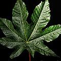Castor Bean Leaf by Debbie Portwood