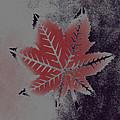 Castor Leaf by Lovina Wright