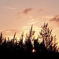 Casurina Sunset by Amar Sheow