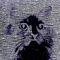 Cat 2 by Lenore Senior