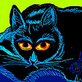 Cat-3 by Anand Swaroop Manchiraju