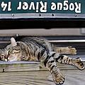 Cat And A Canoe by Susan Leggett