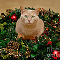 Cat And Christmas Wreath by Amy Cicconi