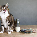 Cat And Herring by Nailia Schwarz