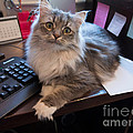 Cat And Keyboard by Louise Heusinkveld