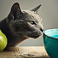 Cat And Pears by Nailia Schwarz