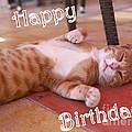 Cat Birthday Card by John Chatterley