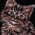 Cat Drawing Portrait by Daliana Pacuraru