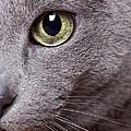Cat Eye by Nailia Schwarz