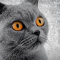 Cat Eyes by Daniel Hagerman
