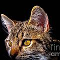 Cat Eyes by Gwen McFadden