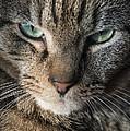 Cat Eyes by John Greim