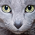 Cat Eyes by Nailia Schwarz