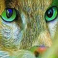 Cat Eyes by Susanna Katherine