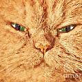 Cat Face Close Up Portrait. Painted Effect by Michal Bednarek