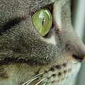 Cat Face Profile by Amy Cicconi