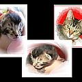 Cat Family by Joyce Dickens