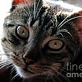 Cat Gaze by Janice Byer