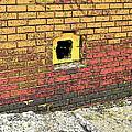 Cat In A Hole In A Wall by Rebecca Korpita