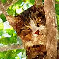 Cat In A Tree  by Dori Marie Art By Design