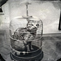 Cat In Cage by Tim Nyberg