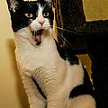 Cat In Disbelief by Jeff Folger